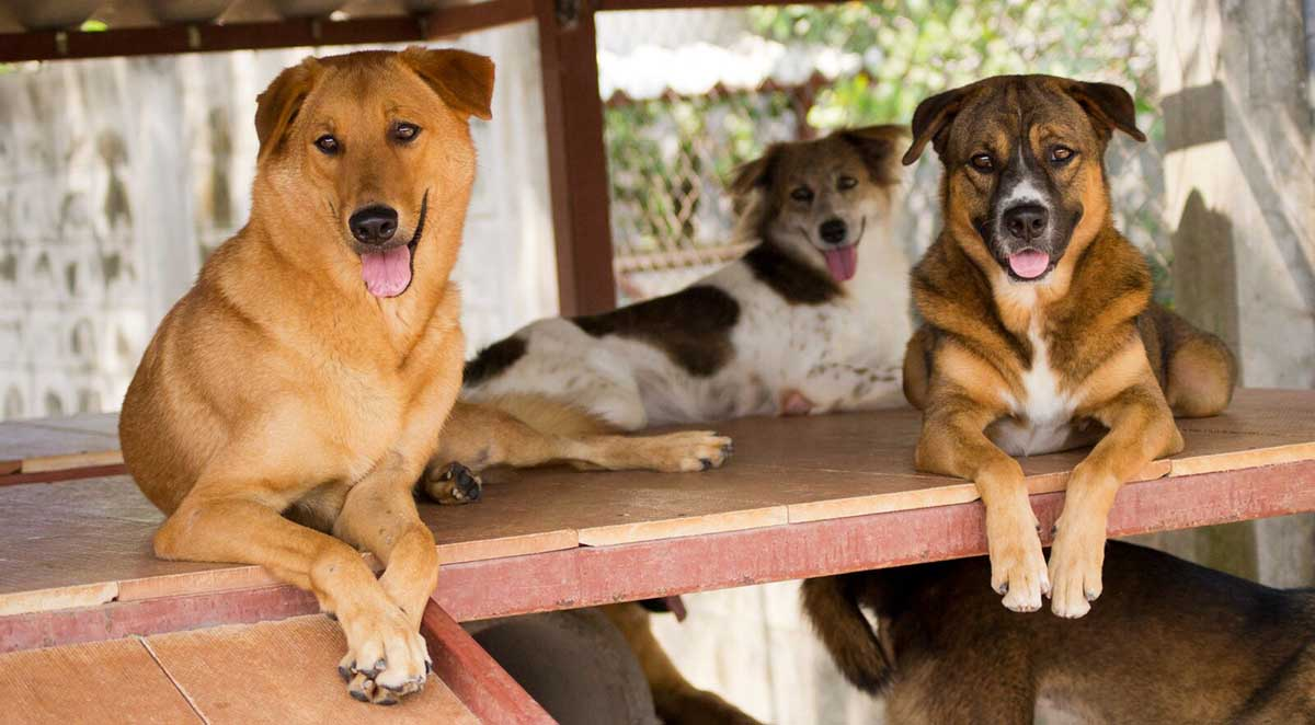 Dogs_for_adoption
